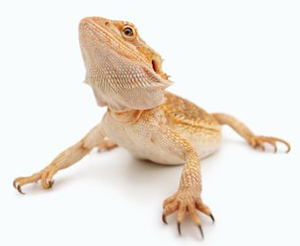 reptiles care guide