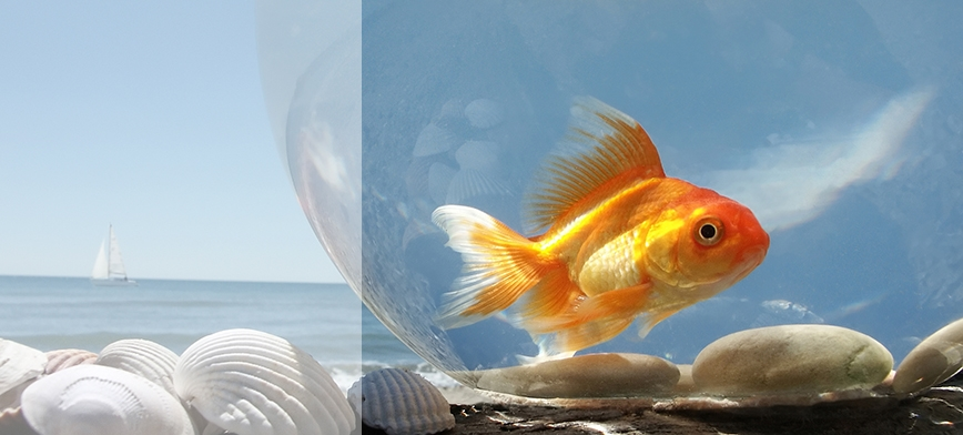 Click here to view our aquariums